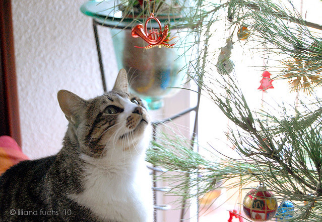 My cat loves the Christmas tree