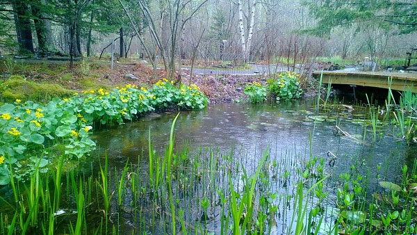 at the Wild Gardens of Acadia