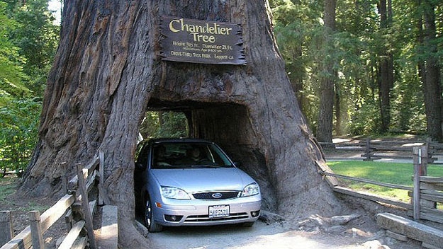 Car driving through Chandelier Tree