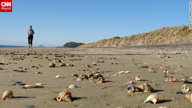 "Cindy Schultz describes Waihi Beach in New Zealand, as paradise. When she woke up one morning to walk along the beach, she found the beach covered in ""beautiful, perfect shells that had washed up over night."" She says, ""I was like a kid in a candy shop!"""