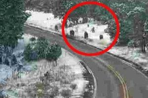 """""""Podemos ter flagrado uma família de Pés Grandes na SR 260 perto de Heber nesta tarde. O que acham?"""", escreveu o Departamento de Transportes do Arizona no Facebook"""
