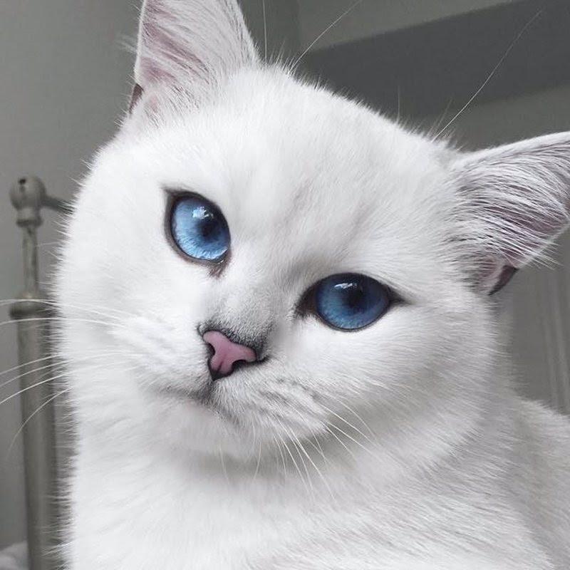 Estos Probablemente Sean Los Ojos De Gato Más Bonitos Que Hayas Visto