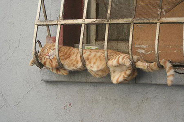 Cats Sleeping In Weird Ways
