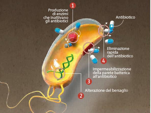 Perché i batteri diventano resistenti agli antibiotici