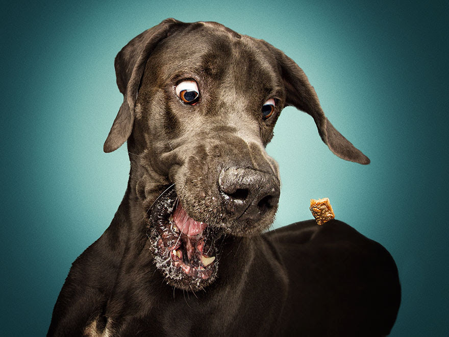 fotos-perros-expresiones-faciales-comida-christian-vieler-2 (13)