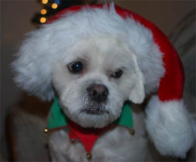 Santa-Dory
