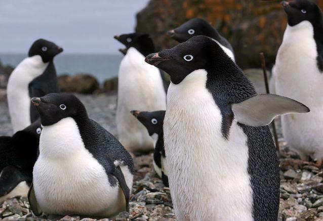 perierga.gr - 10 είδη υπέροχων πιγκουίνων!