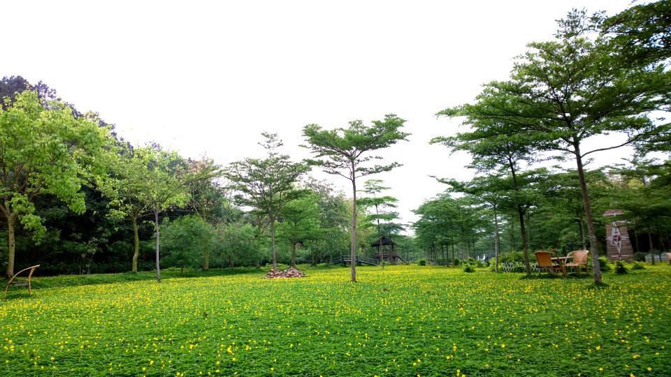 Hoa lạc tại Mê Linh