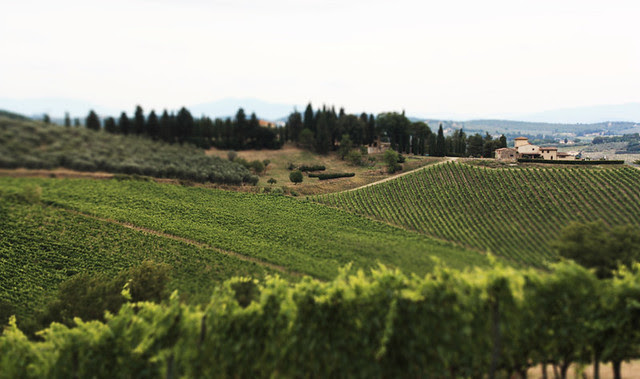 vinyarditaly