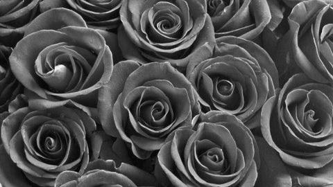 Are Black Roses Real Vivaroses Co