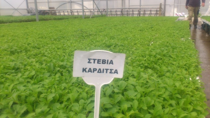 Αγροτικός Συνεταιρισμός Στέβιας Καρδίτσας: Το πρώτο εργοστάσιο στην Ευρώπη