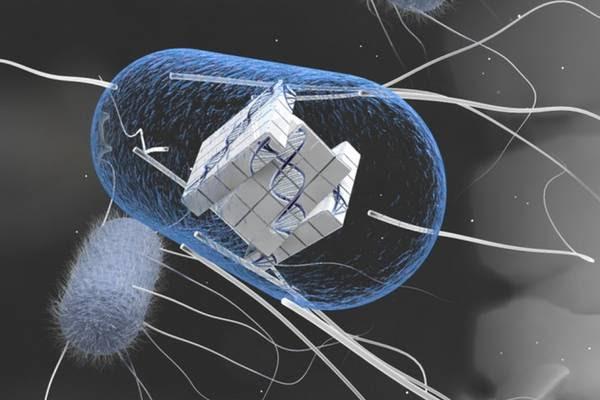 Rappresentazione grafica della cellula trasformata in un computer vivente, al suo interno il circuito fatto di enzimi e geni (fonte: Lu et al, MIT)