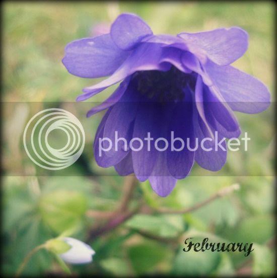 photo jewelledweb-feb14-550.jpg