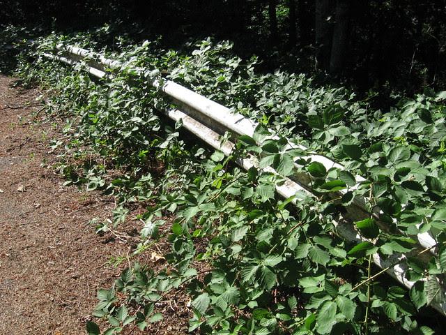 Guardrail, Kelly Butte