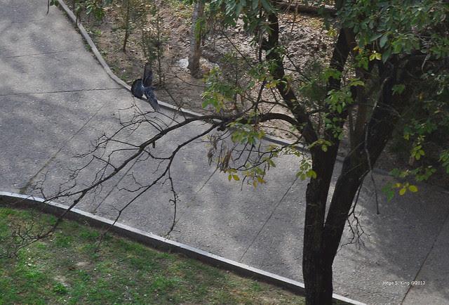 Pirueta de paloma III