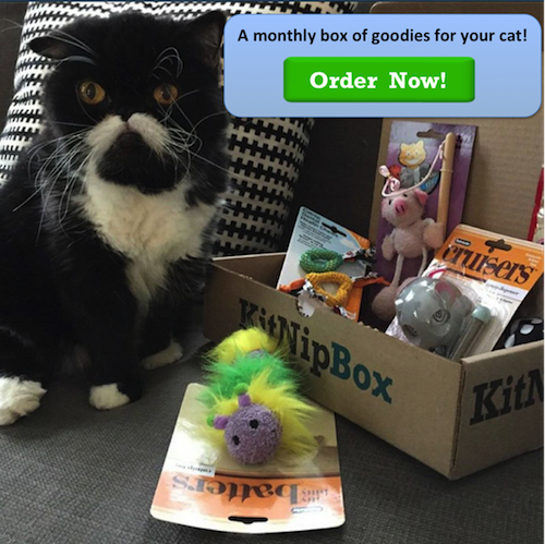 Order your monthly box of cat goodies at www.kitnipbox.com today!