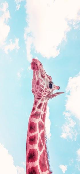 Cool giraffe under blue sky wallpaper
