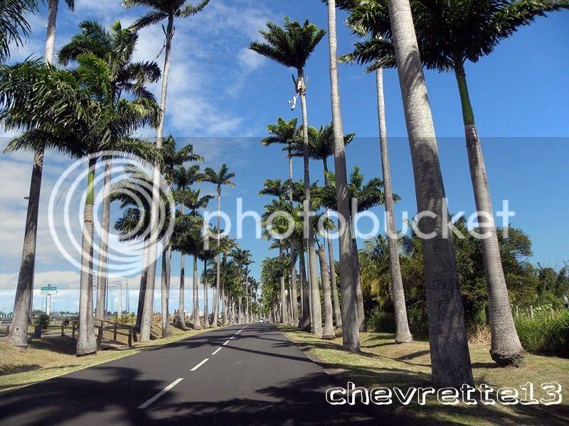 http://i1252.photobucket.com/albums/hh578/chevrette13/Guadeloupe/DSCN7454Copier_zps57a58715.jpg
