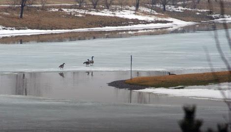 return of geese