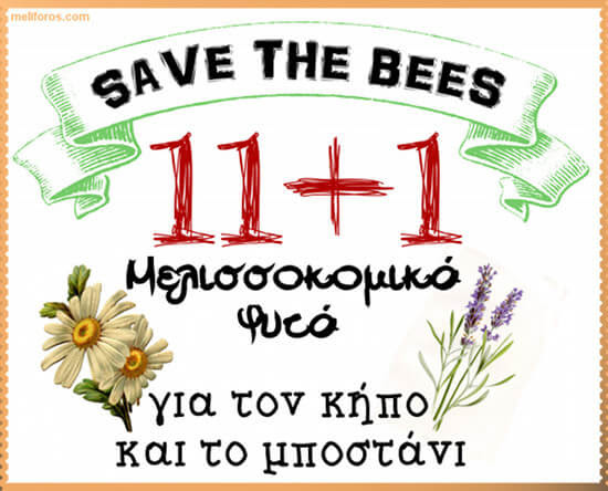 Μελισσοκομικά Φυτά για τον κήπο και το μποστάνι
