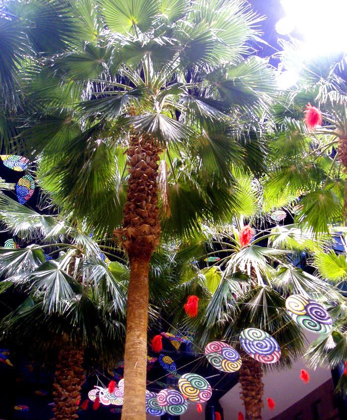 Winter Garden palms