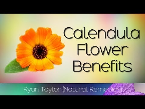 Calendula Flower: Benefits & Uses