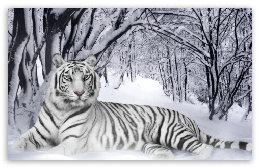 Ultra Hd Tiger Wallpaper Hd For Mobile