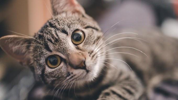 ¿Cómo envejecen los gatos? Síntomas y enfermedades frecuentes
