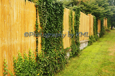 a wood fence covered in green ivy