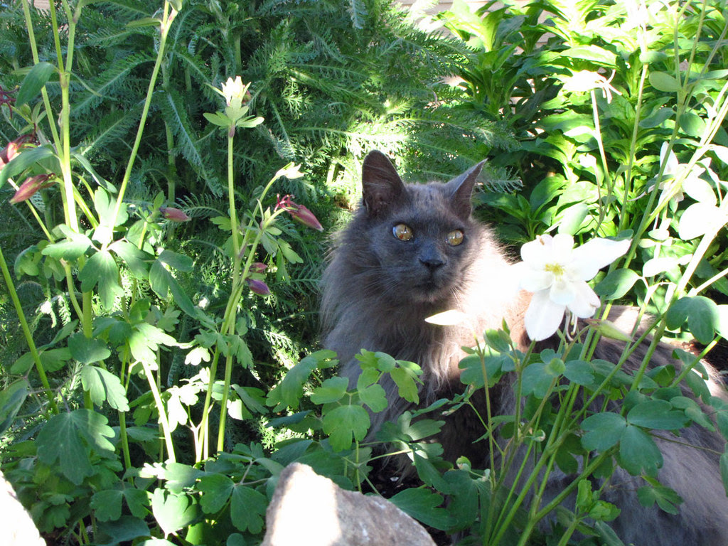 Garden Stalker