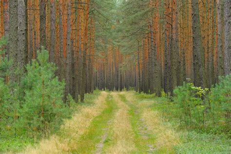 thueringen biosphaerenreservat verdoppelt flaeche wild und