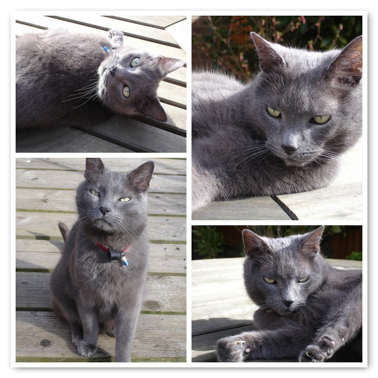 Springtime Henry Cat