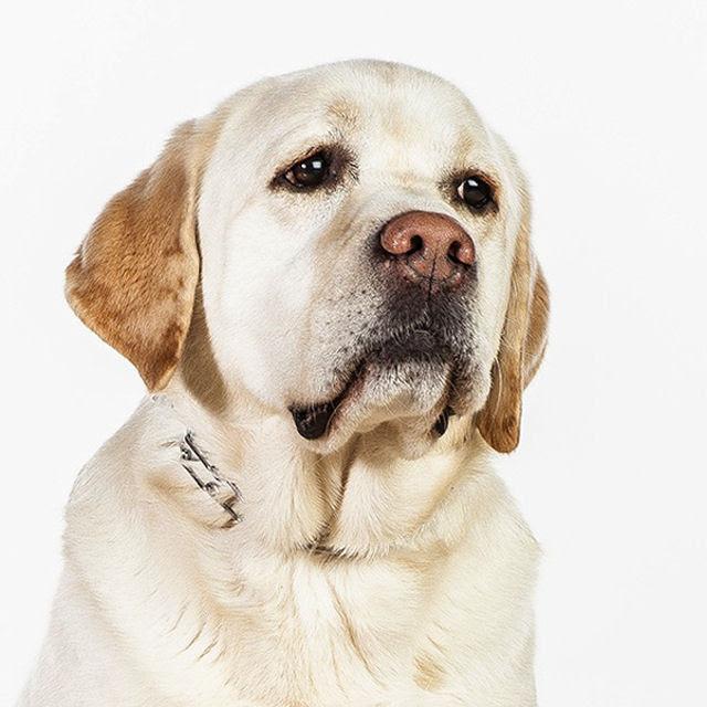 Retratos de cães cheios de personalidade 10