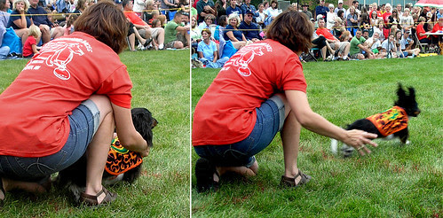 Dachshunds races