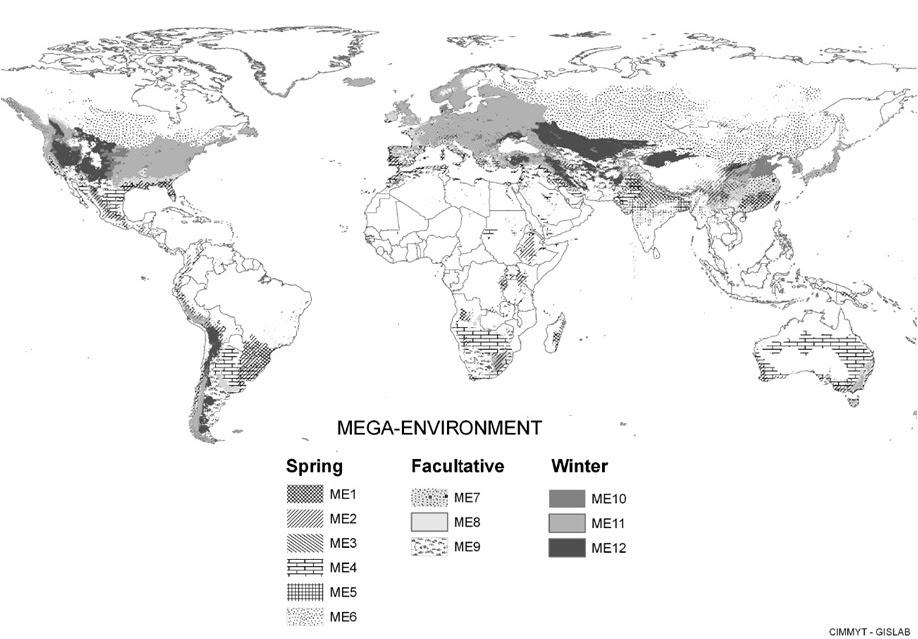 Global Distribution of Wheat Mega-environments