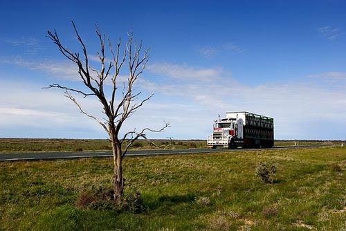 Cobb Highway, Wanganella, New South Wales, Australia, The Long Paddock IMG_5667_Wanganella
