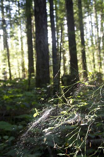forest galaxy