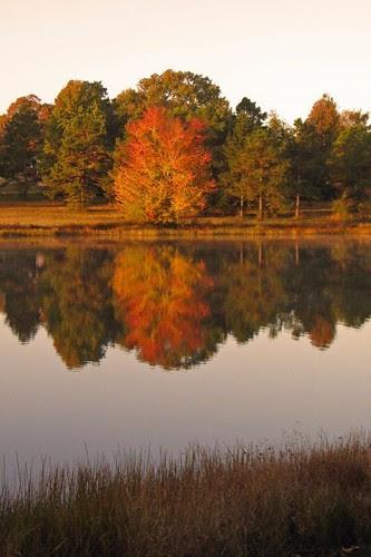 Cox Lake Reflection