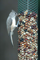 Top Ten Bird Feeding Tips
