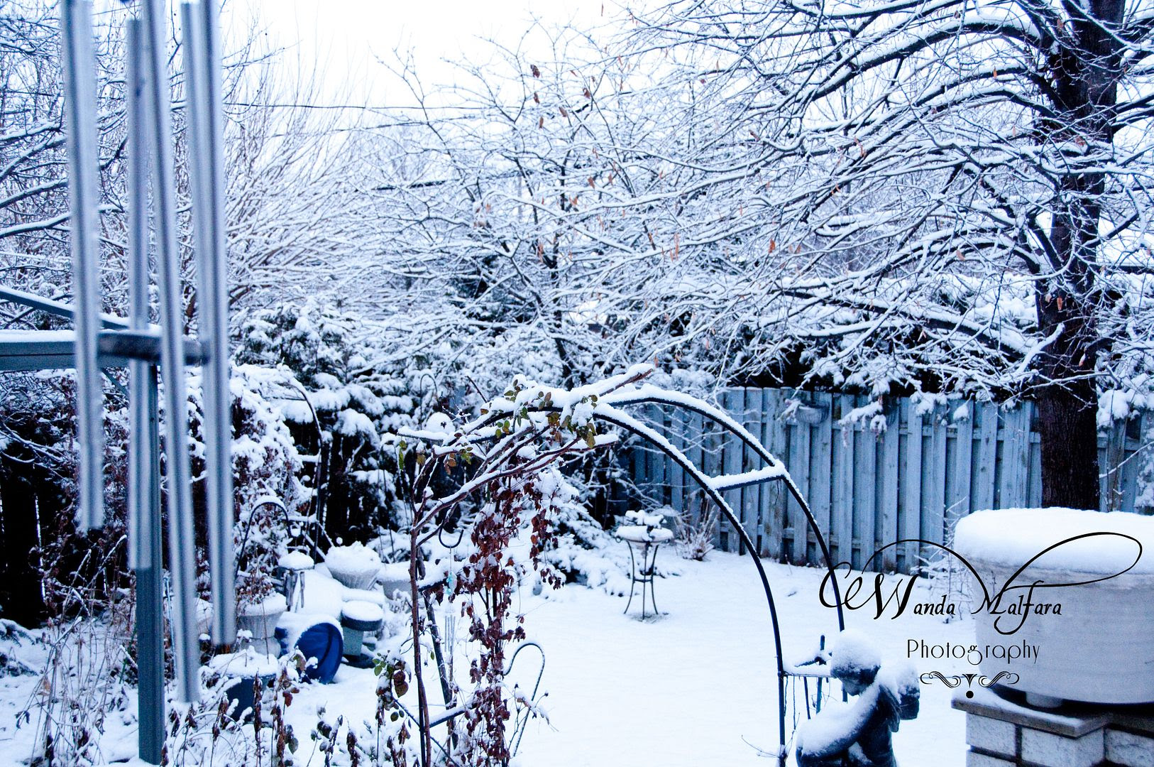 Wed Jan 18, 2011, My frosty backyard