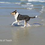Teach - Tails of Teach