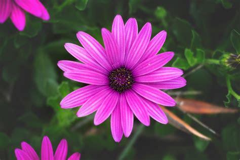 fotos gratis florecer flor de cerca fondos de