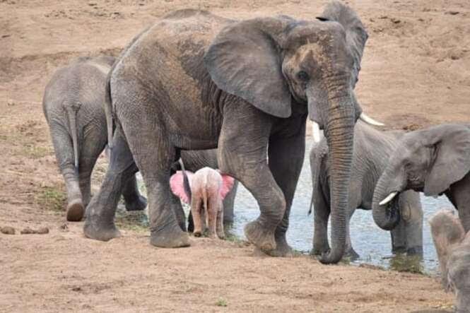 Foto: Pink Elephant