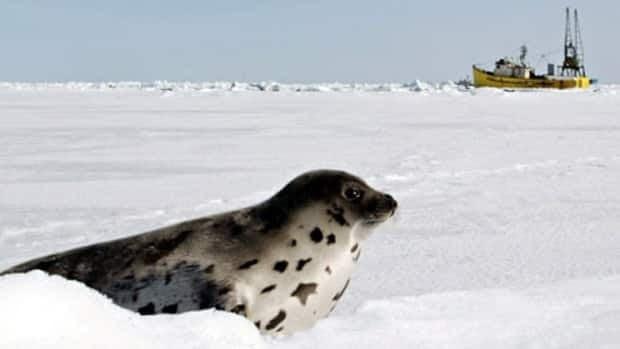 Seal product ban upheld