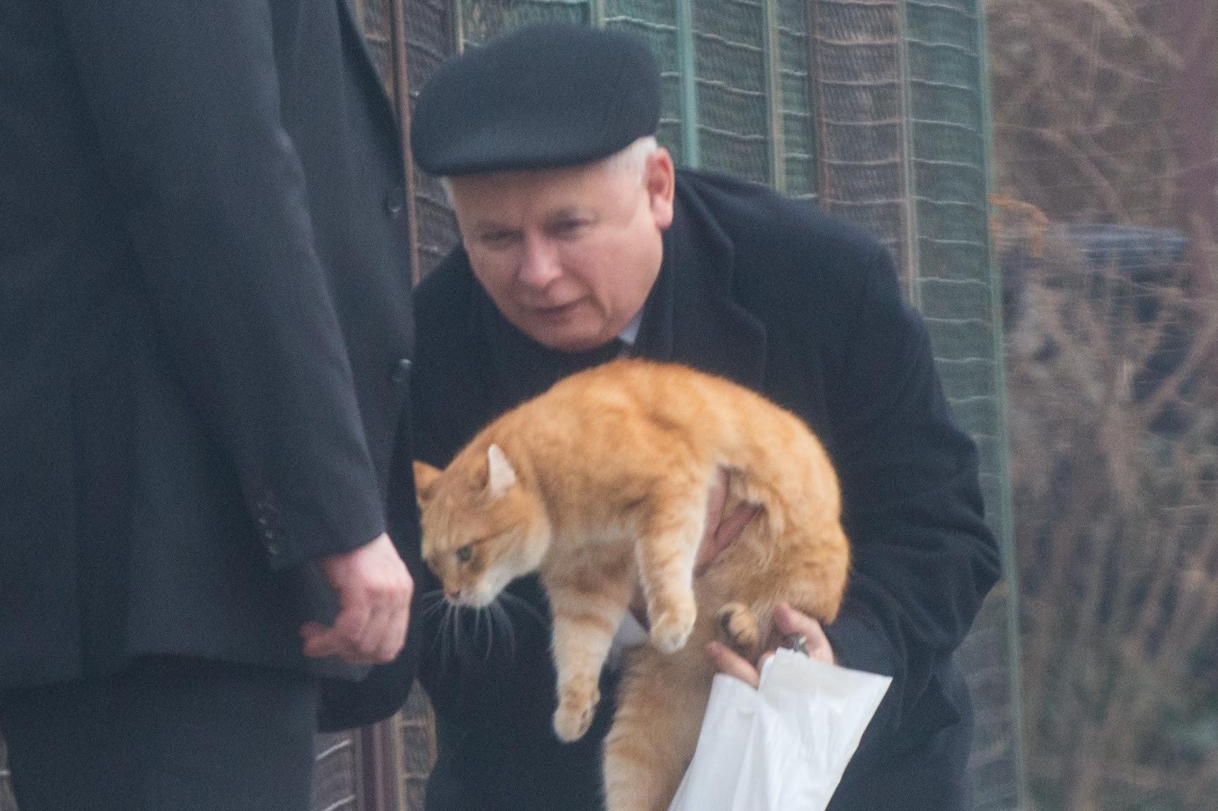 Znalezione obrazy dla zapytania memy kaczyński z kotem