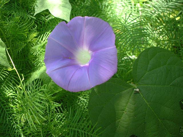 366日誕生花の辞典8月の誕生花 誕生花の図鑑