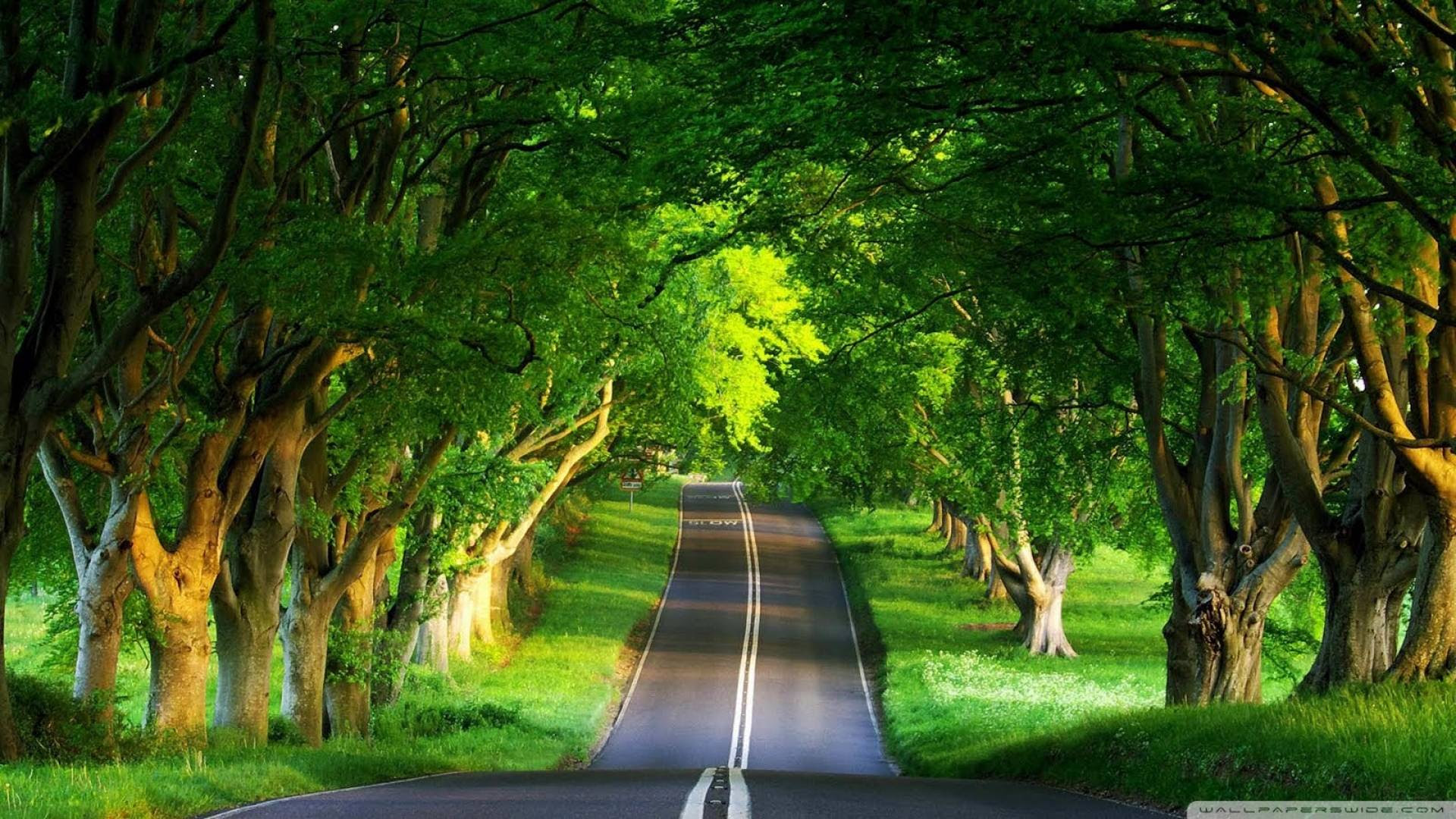 Green Tree road[1920×1080]