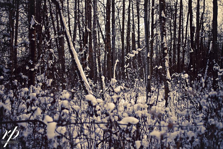 ~ 362/365 Wilderness ~