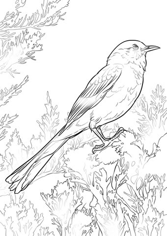 4700 Top Mockingbird Coloring Pages Download Free Images