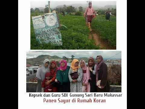 Wisata Edukasi Panen Sayur di Kampung Sayur